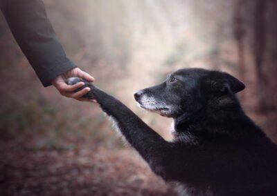 Fotografiranje Kućnih Ljubimaca, Fotografiranje pasa, Fotografiranje mačaka, Fotografiranje životinja